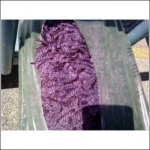 Just what we were looking for -- purple shag rug